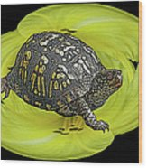Eastern Box Turtle On Yellow Lily Wood Print
