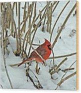 Eastern Cardinal - Cardinalis Cardinalis Wood Print