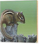 Eastern Chipmunk On Snag North America Wood Print