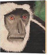Eastern Colobus Monkey Wood Print