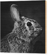 Eastern Cottontail Rabbit Portrait Wood Print by Rebecca Sherman