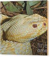 Eastern Diamondback Rattlesnake Albino Wood Print