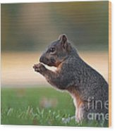 Eastern Fox Squirell Wood Print by Brandon Alms