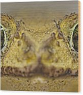 Eastern Giant Toad Wood Print