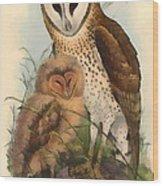 Eastern Grass Owl Wood Print