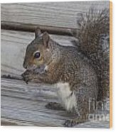 Eastern Gray Squirrel-4 Wood Print