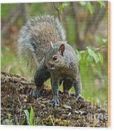 Eastern Gray Squirrel Wood Print by Linda Freshwaters Arndt