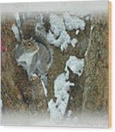 Eastern Gray Squirrel - Sciurus Carolinensis Wood Print