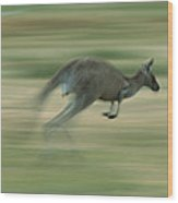 Eastern Grey Kangaroo Female Hopping Wood Print