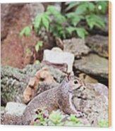Eastern Grey Squirrel  Wood Print
