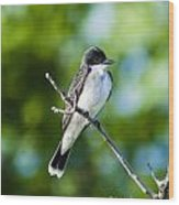Eastern Kindbird  Wood Print