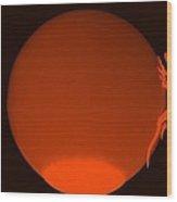 Eastern Lizard Orange Wood Print