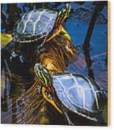 Eastern Painted Turtles Wood Print