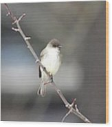 Eastern Phoebe Wood Print