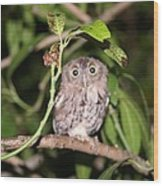 Eastern Screech Owl 1 Wood Print