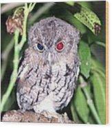 Eastern Screech Owl 2 Wood Print