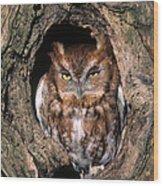 Eastern Screech Owl - Fs000810 Wood Print