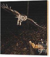 Eastern Screech Owl Hunting Wood Print