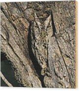 Eastern Screech-owl Otis Asio Wild Texas Wood Print