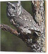 Eastern Screech-owl Otus Asio Wood Print