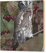 Eastern Screech Owl Red And Gray Phases Wood Print