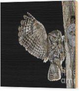 Eastern Screech Owls At Nest Wood Print
