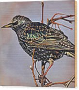 Common Starling Wood Print