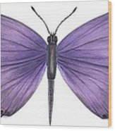 Eastern Tailed Blue Butterfly Wood Print by Anonymous
