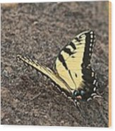 Eastern Tiger Swallowtail 8564 3241 Wood Print