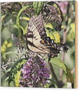 Eastern Tiger Swallowtail - Butterfly Wood Print