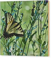 Eastern Tiger Swallowtail Ins 76 Wood Print