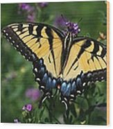 Eastern Tiger Swallowtail Wood Print