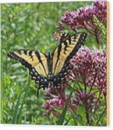 Eastern Tiger Swallowtail On Joe Pye Weed Wood Print