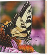 Eastern Tiger Swallowtail Wood Print