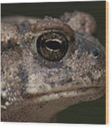 Eastern Toad Detail Wood Print