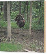 Eastern Tom Turkey Wood Print