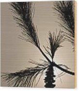 Eastern White Pine Wood Print