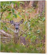 Eastern Whitetail Deer Wood Print
