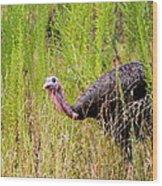 Eastern Wild Turkey - Longbeard Wood Print