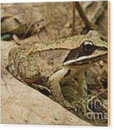 Eastern Wood Frog Wood Print