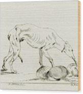Eating Dog, D. Merrem Wood Print