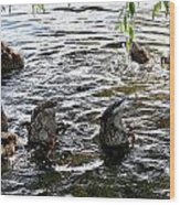 Eating Ducks Wood Print