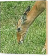 Eating Impala  Wood Print