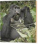 Eating Mountain Gorilla Wood Print