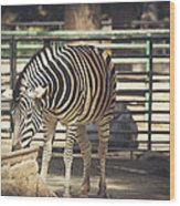 Eating Zebra Wood Print
