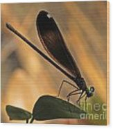 Ebony Damselfly Wood Print