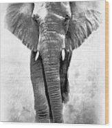 Ebony Ivory African Elephant Wood Print