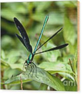 Ebony Jewelwing Wood Print