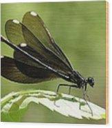 Ebony Jewelwing Fluttering For Male Wood Print