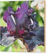 Ebony Violet Wood Print